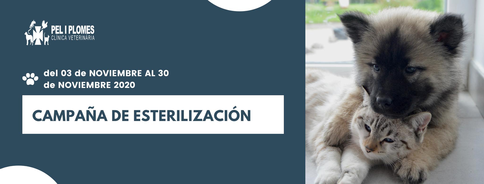Beneficios de la esterilización animal
